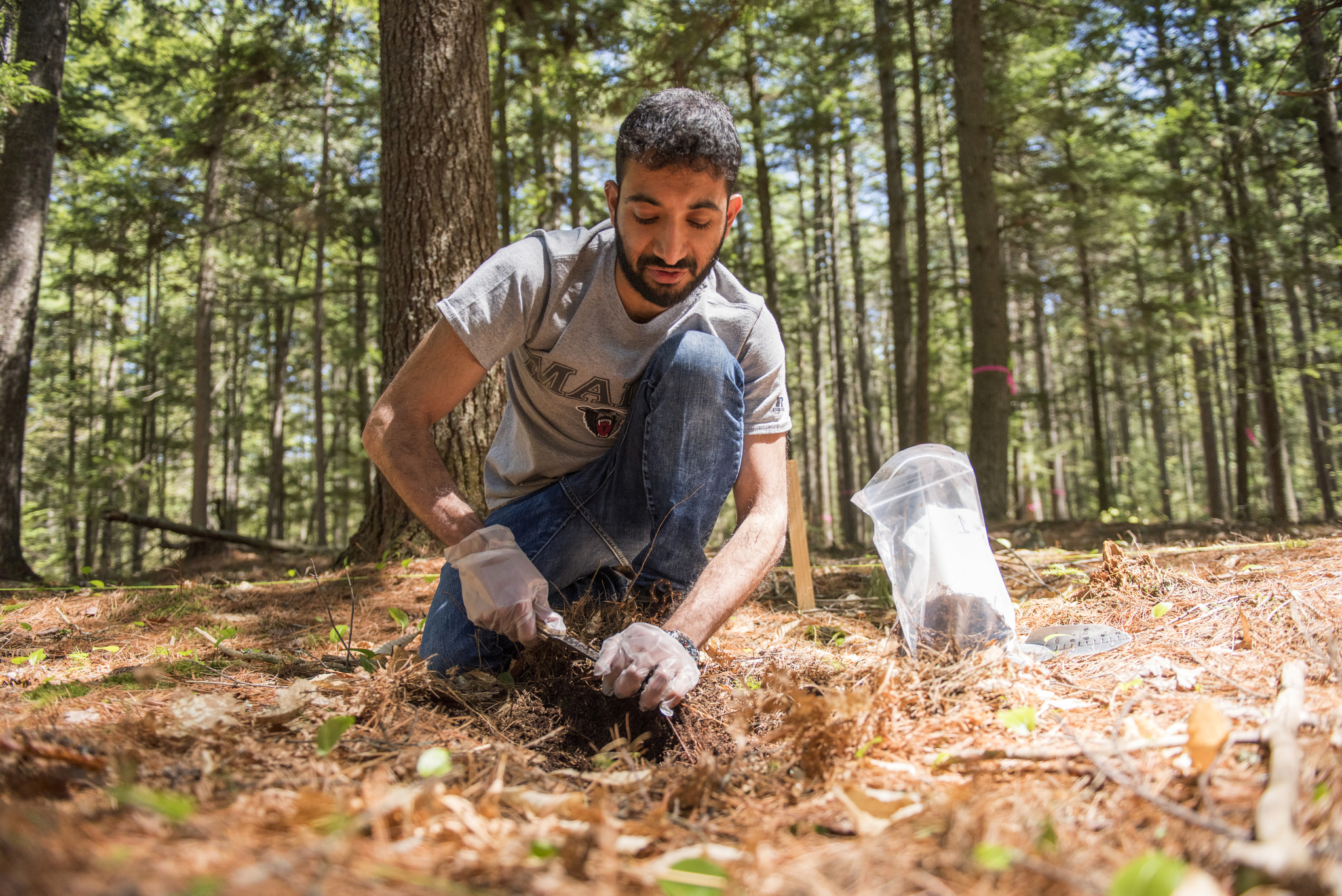 Kaizad - who received his undergraduate degree in India - is sampling forest soils for study of their role in carbon storage.  (University of Maine)